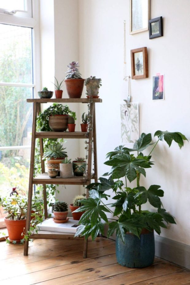 bringing the outside in with plants