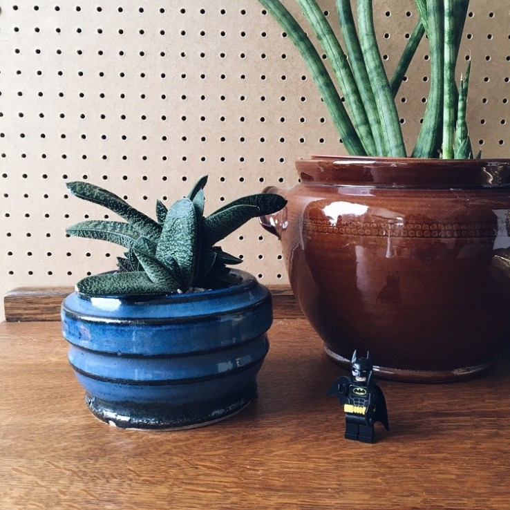 plants make people happy and green up your gaff with succulents