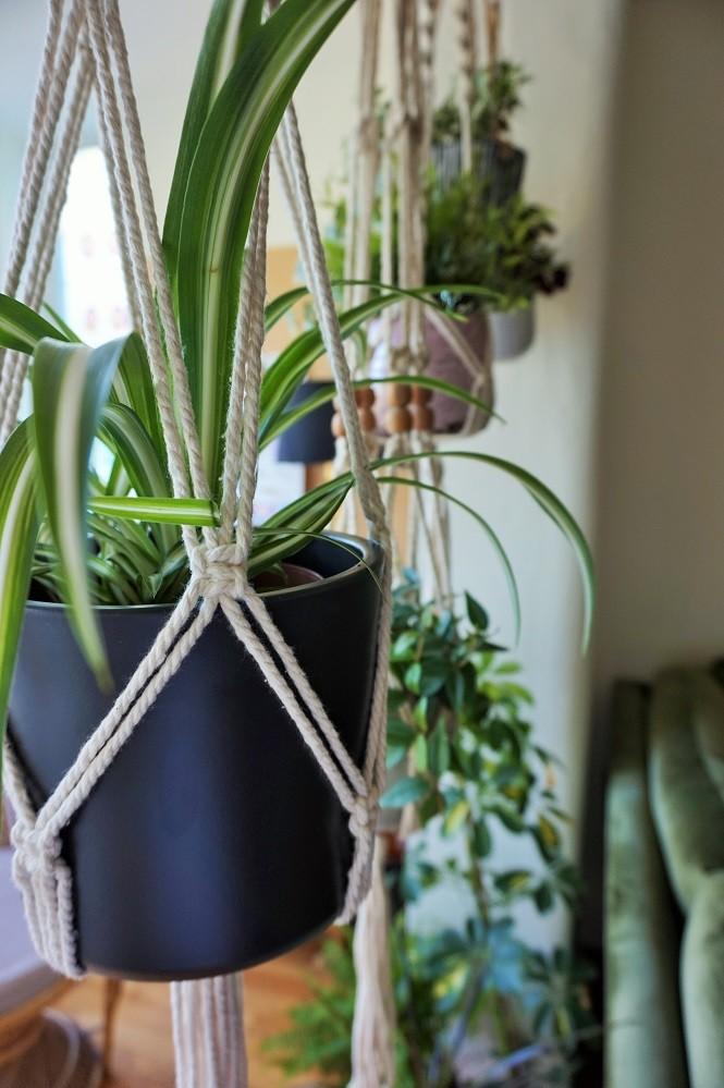 70s boho hanging plants