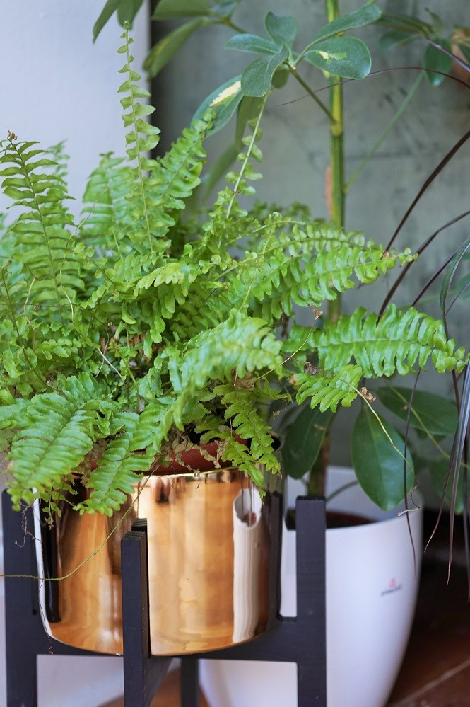 boston fern boho living room with plants