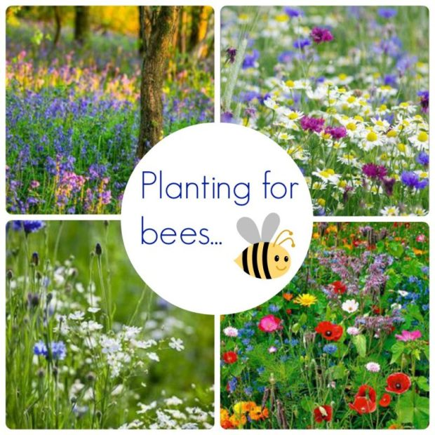 wild flowers planting for bees