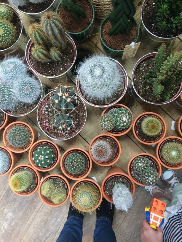 plant table cactus collection