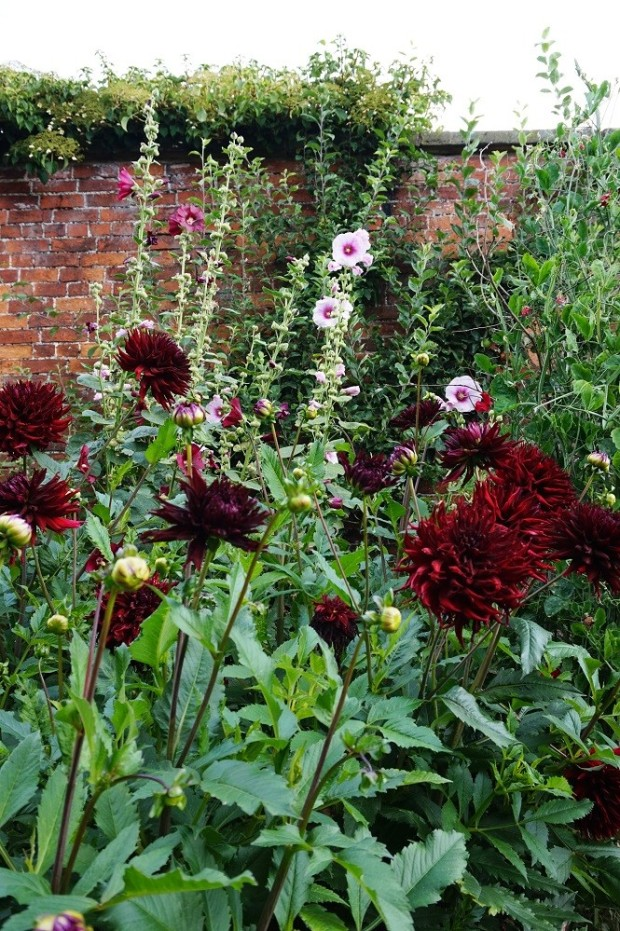 flowers in anwelsh walled country garden wales