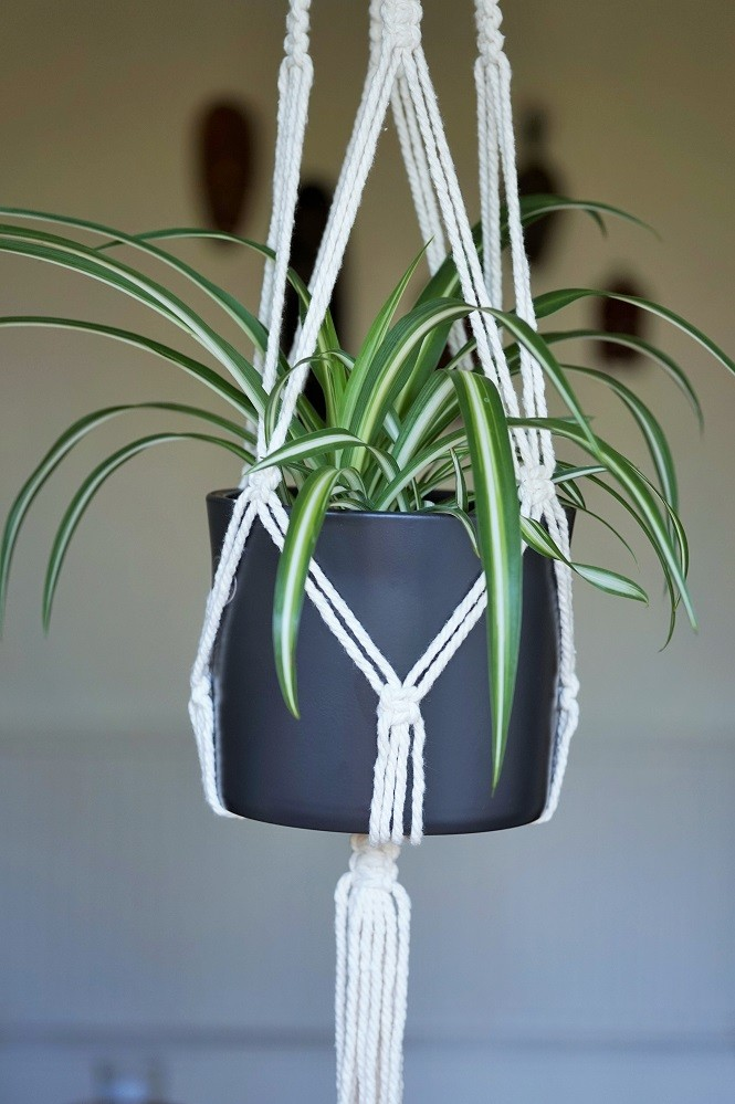 spider plant houseplants for hanging indoors