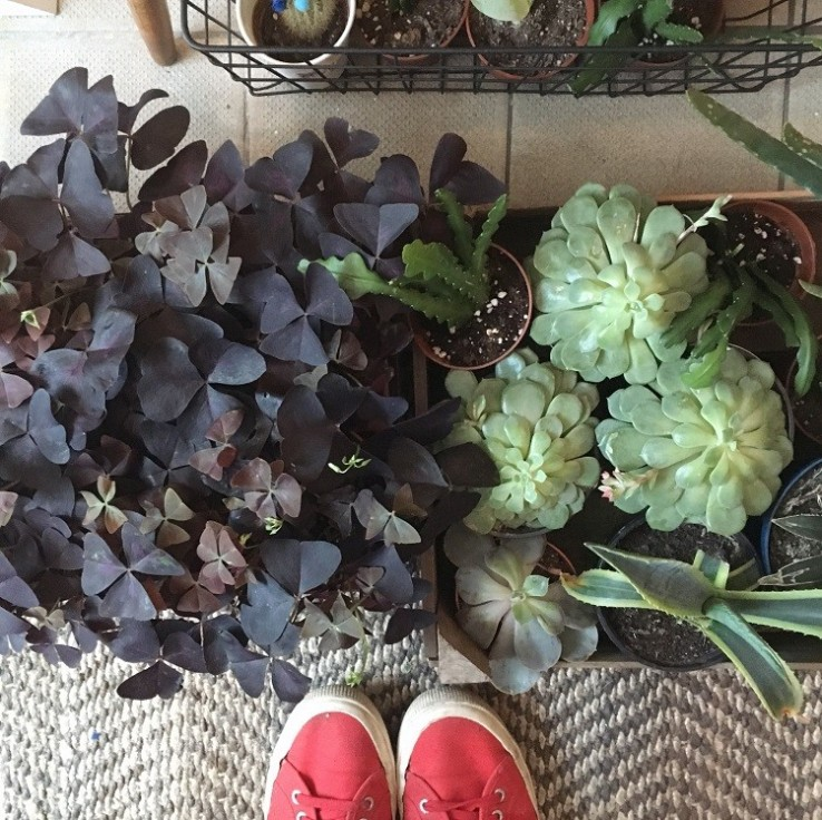 plants for the home