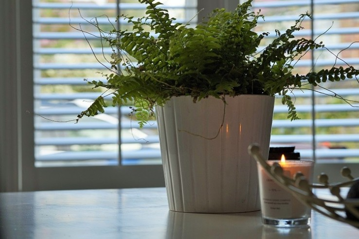 candle plants white shutters