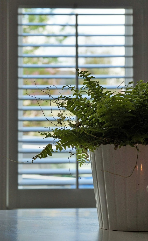 fern plants boho dining room shutters