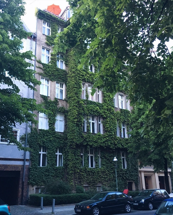 plants climbing up building in berlin leafy