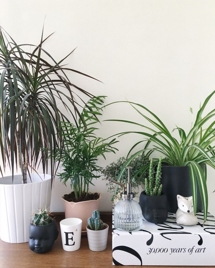 collection of houseplants on display using books