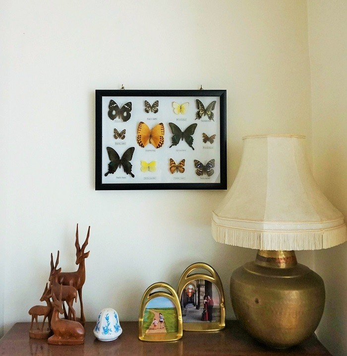 framed butterflies making your home more personal