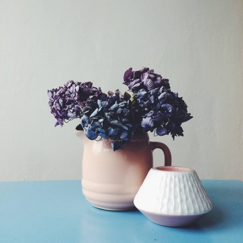 hydrangea pink vase blue table rose quartz serenity